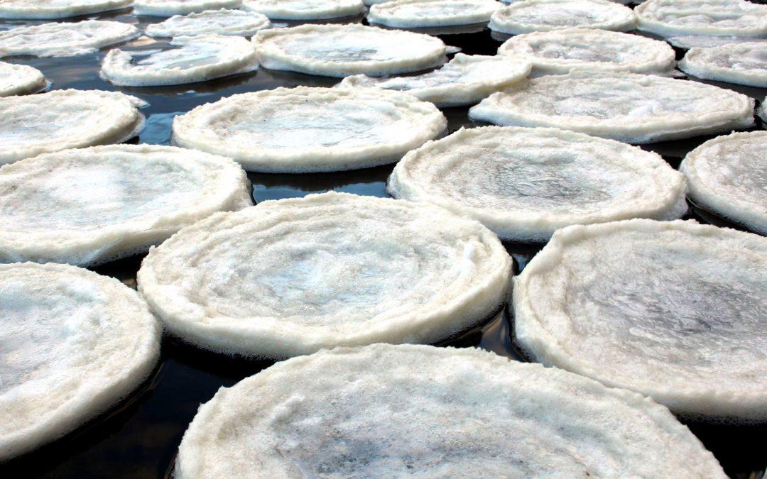 Las galletas de hielo o Ice Pancakes, curioso fenómeno invernal