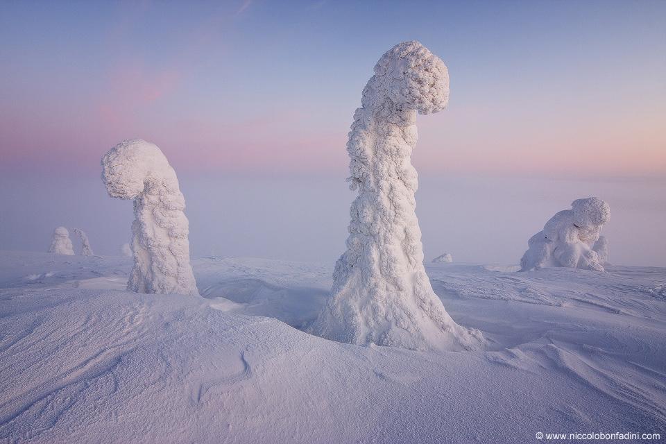 Los caminantes blancos, los centinelas del Ártico