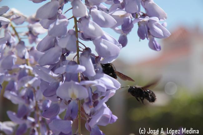 El aumento global de la temperatura intensifica el aroma floral