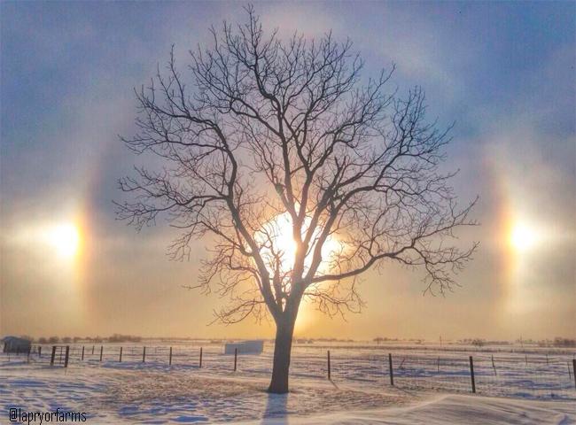 Los halos helados: uno de los fotometeoros más bellos del cielo