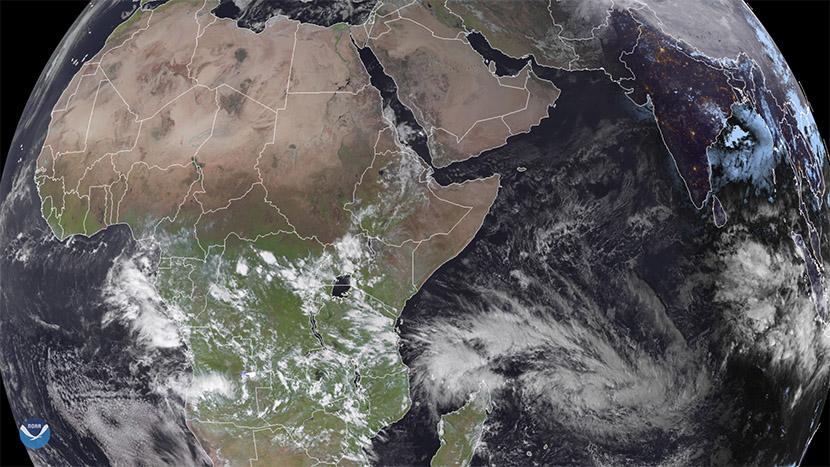 Plaga de langostas en África Oriental a causa de lluvias anómalas en la zona