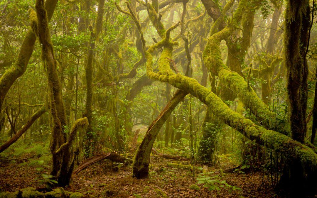 LIFE NIEBLAS: reforestar y captar agua de la lluvia horizontal